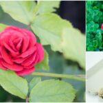 Como fazer lindas rosas com caixas de ovos