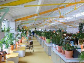 Dez interiores de escritorios verdejantes cheios de arvores e plantas