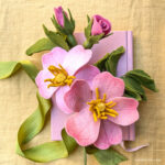 Modelo e tutorial de rosas selvagens de feltro