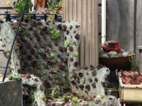 succulents growing on a wingback armchair